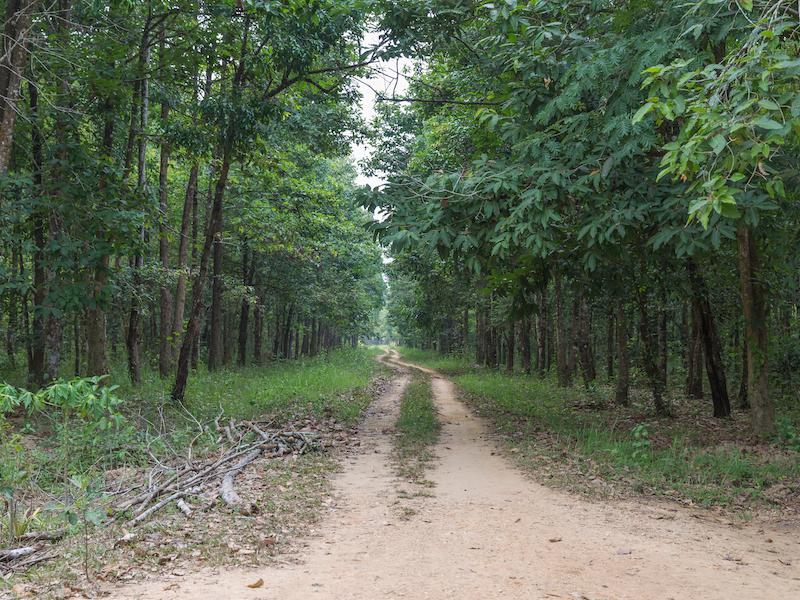 Cat-Tien-national-park.-1