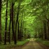 Nam-Cat-Tien-forest